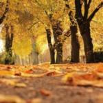 Provoz ŠD o podzimních prázdninách 26. - 27. 10. 2017